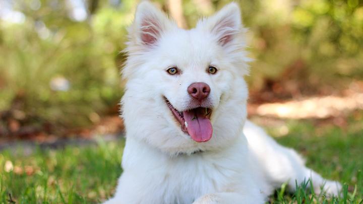 perros-lametazos
