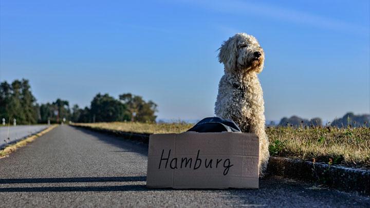 viajar-perro