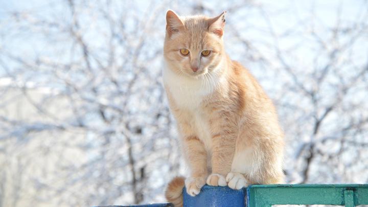 gatos-invierno