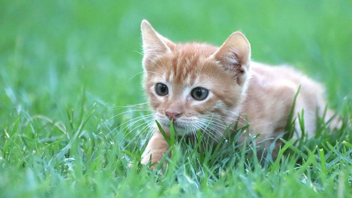 gatos-plantas