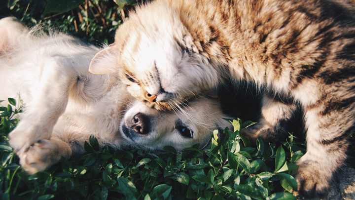 perros-gatos-fobias