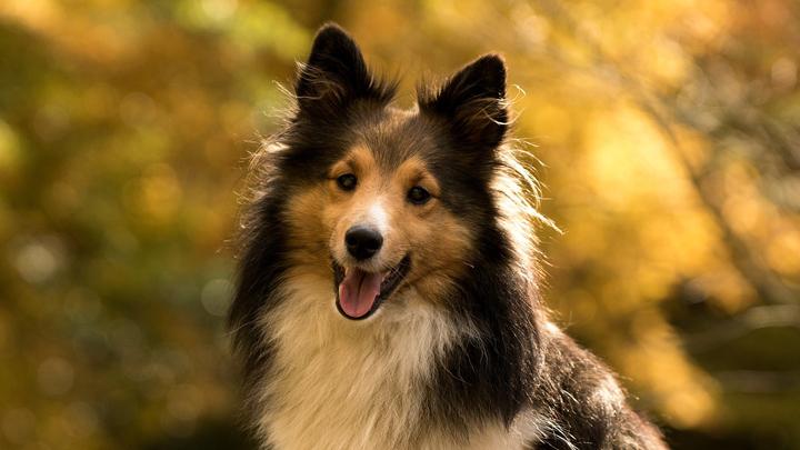 perros-otono