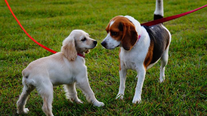 perros-perdidos