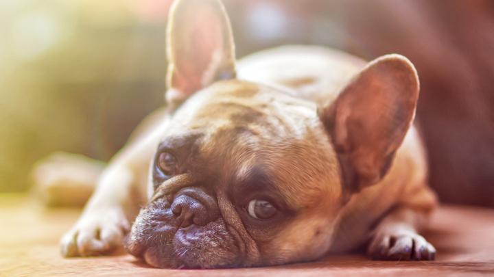 perros-tristes