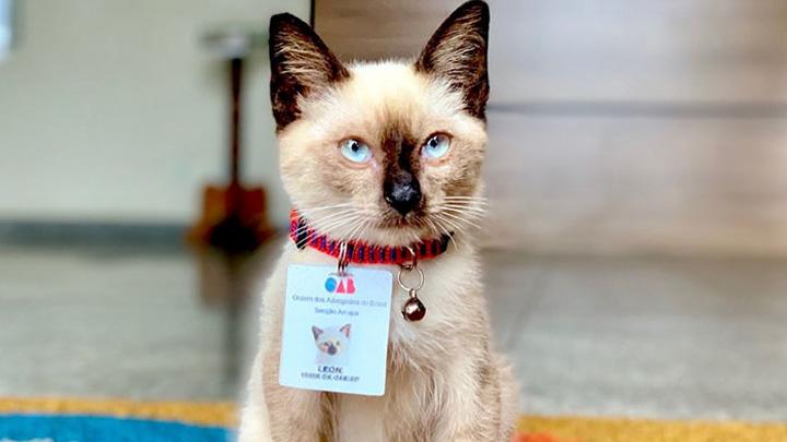gato-abogado