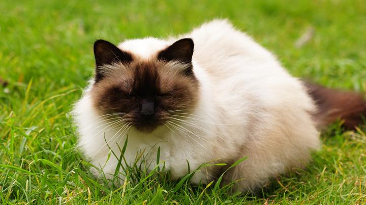 gatos-amorosos