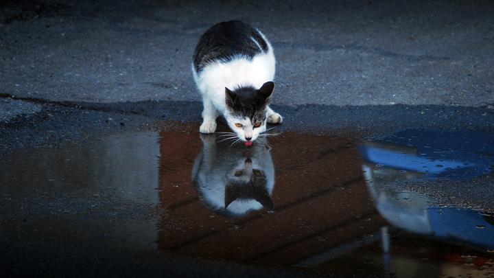 gatos-beber-agua