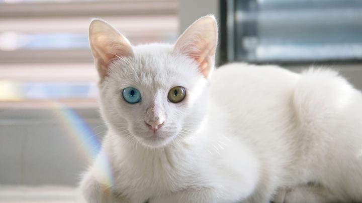 gatos-esperanza-vida