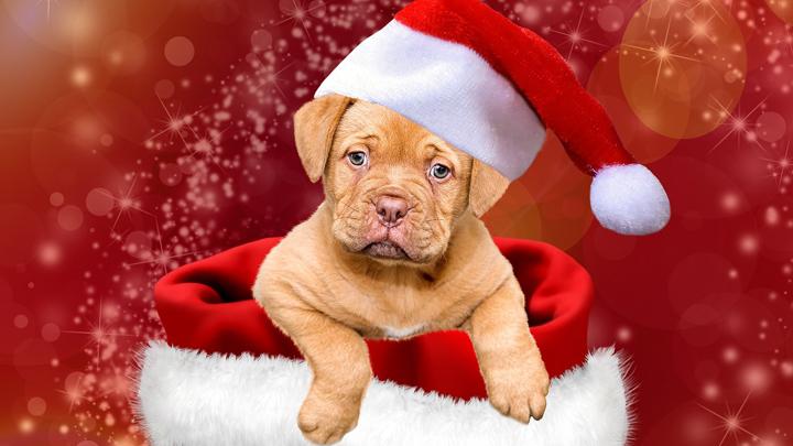perros-navidad