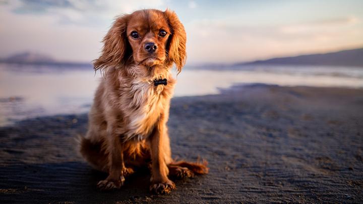 perros-atenciones