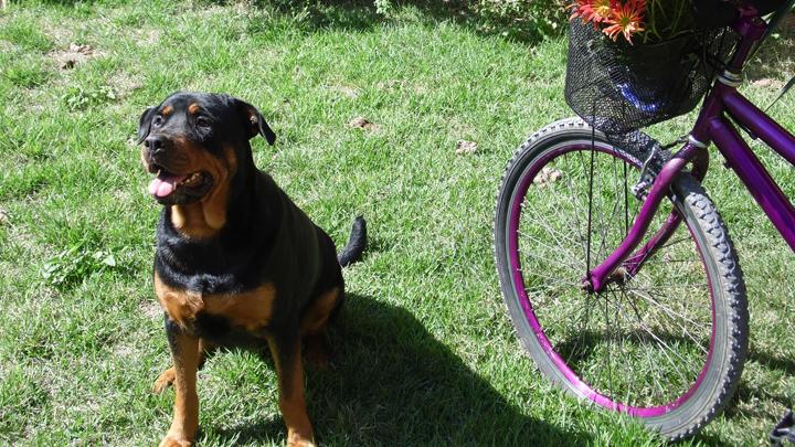 perros-bici