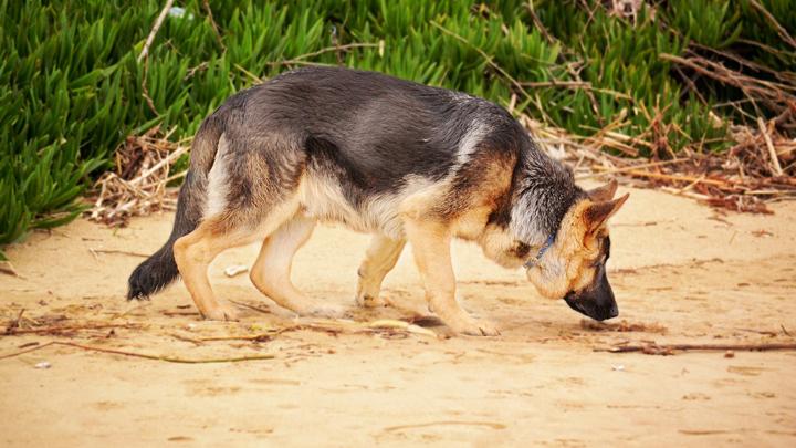 perros-heces