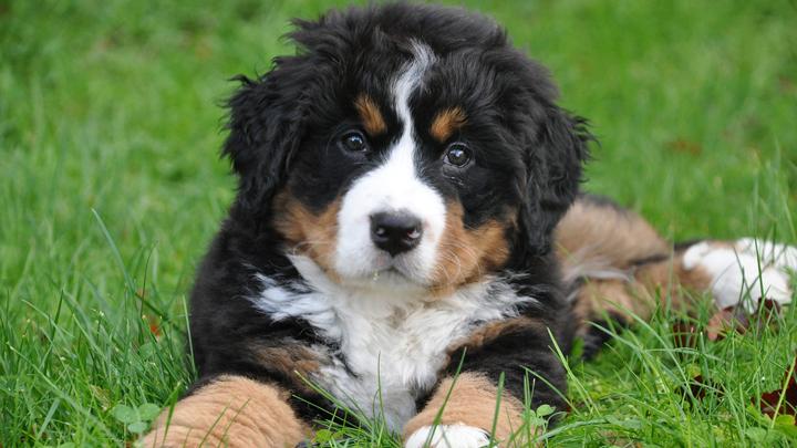 perros-para-principiantes