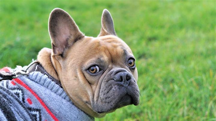 abrigos-perro