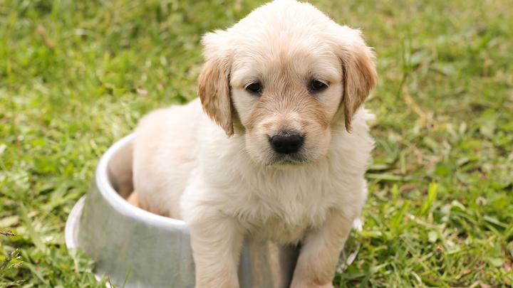 perros-gluten
