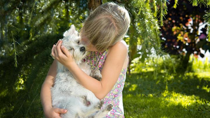 perros-bienestar-emocional