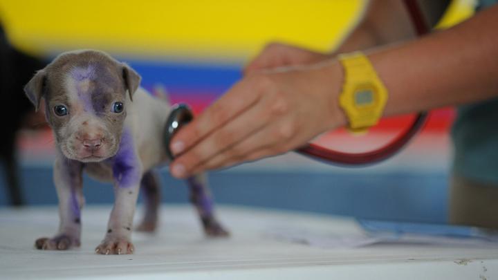 perros-veterinario