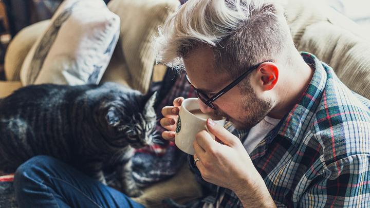gatos-amor