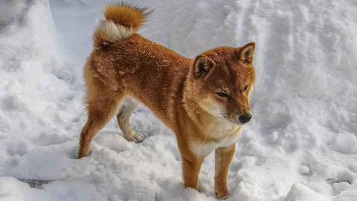 razas-perro