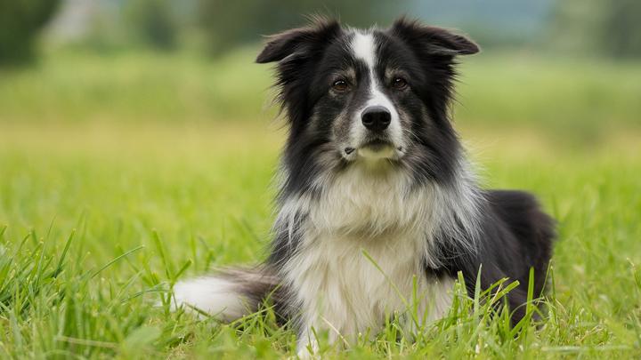 perros-regalo