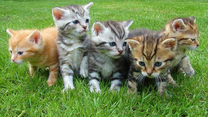 segundo-gato