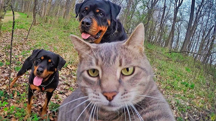 gatos-famosos