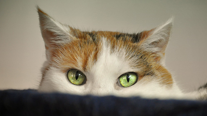 gatos-fobias