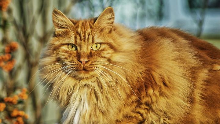 gatos-mayores