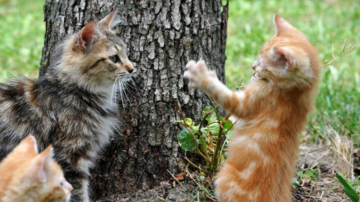 gatos-arenero