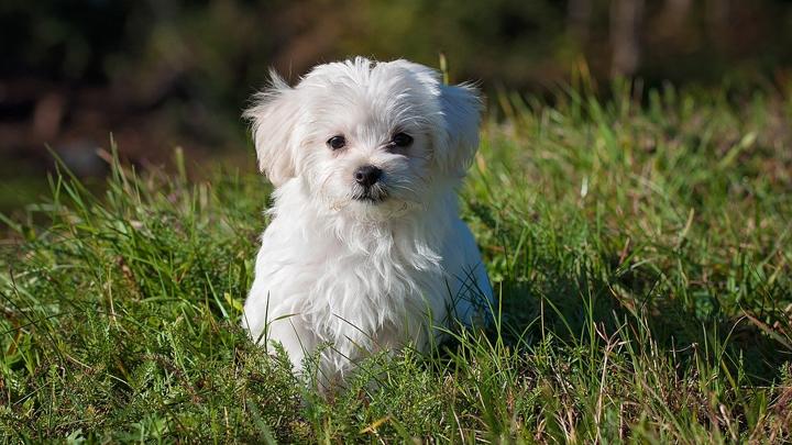 perros-pipetas