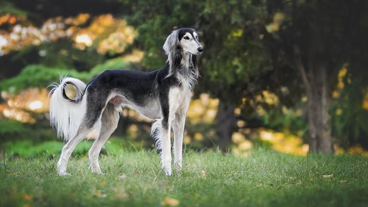 perros-bellos