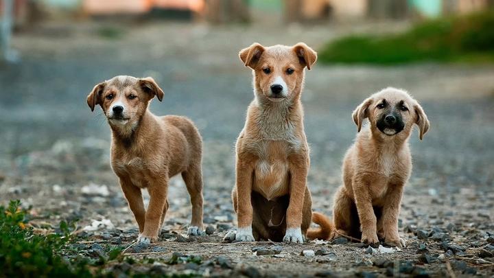 perros-familias