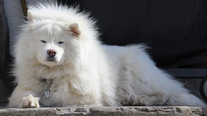 perros-caros