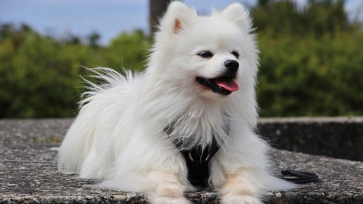 perros-pelaje