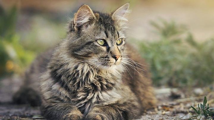 gatos-nombres
