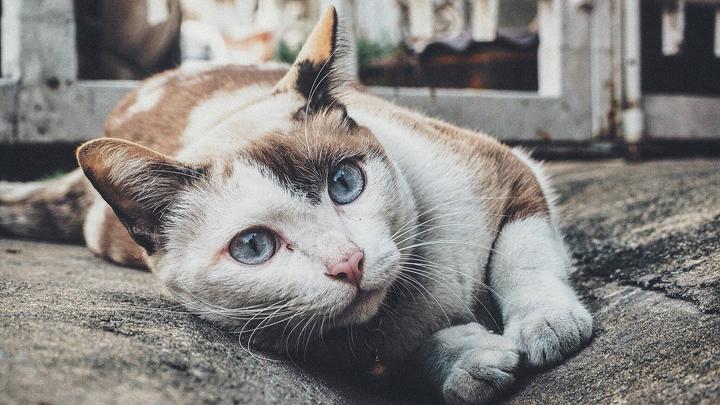 nombre-gato