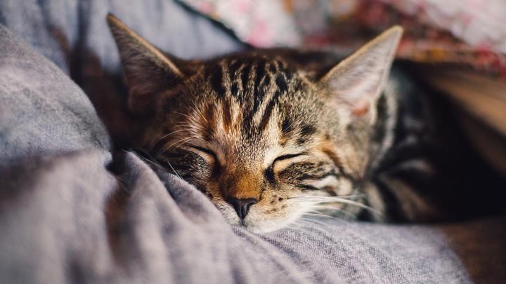 gatos-dolor
