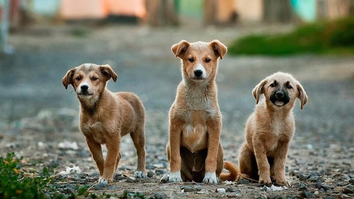 perros-babas-temblores