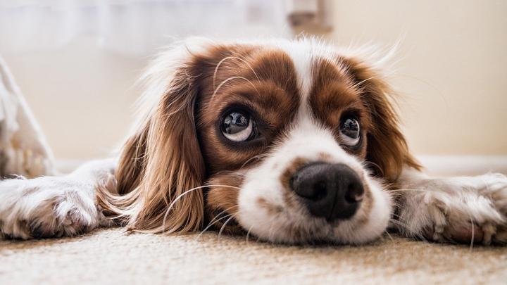 perros-cancer