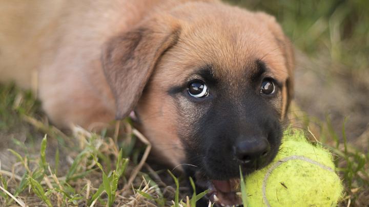 perros-morder