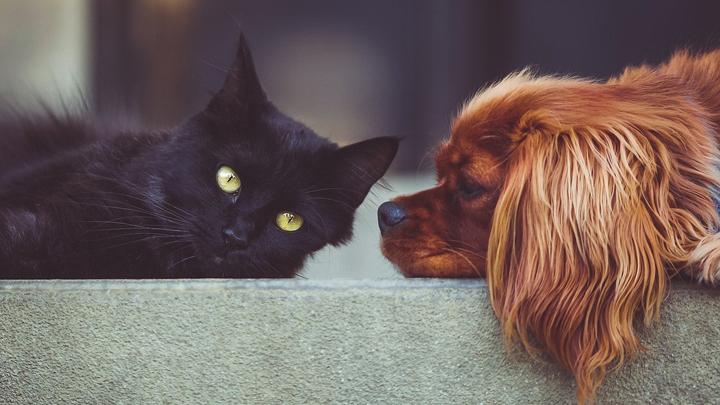perros-gatos-cancer