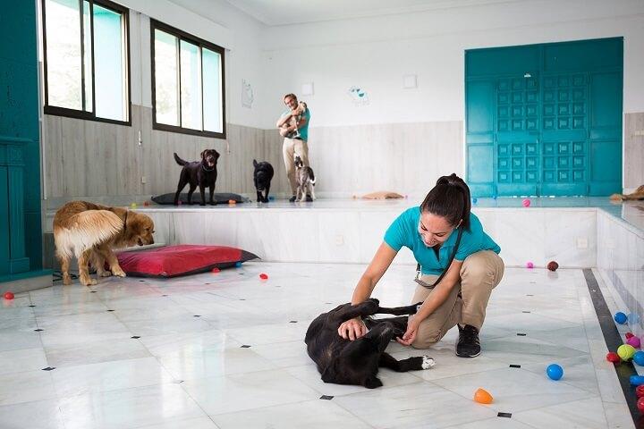 resort-perros