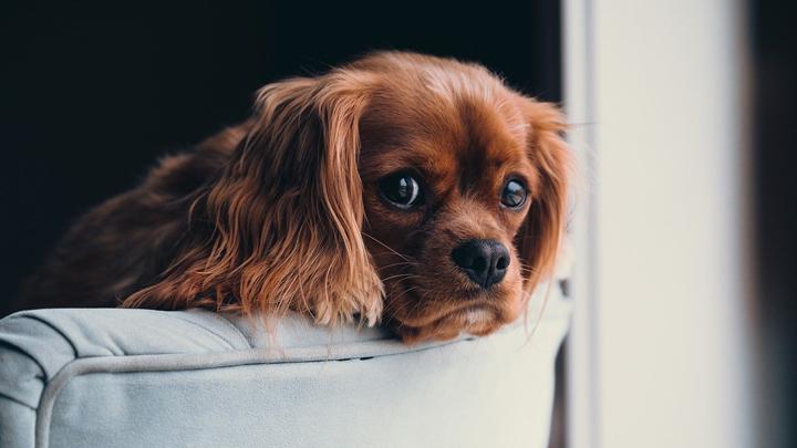 perros-confinamiento