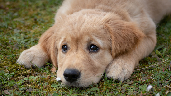 perros-confinados