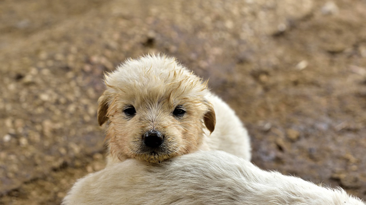 perros-miedo