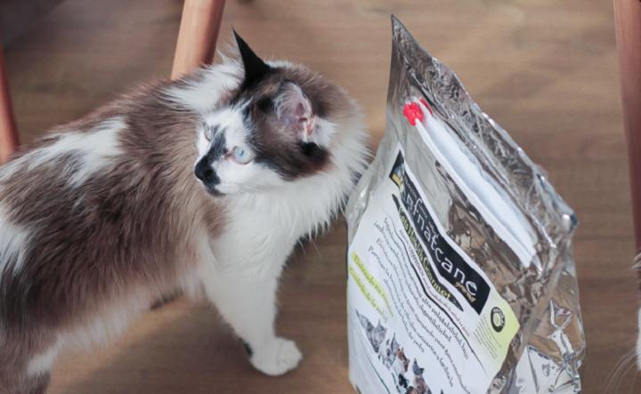 Cat-Health-Gourmet