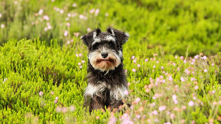 perros-primavera