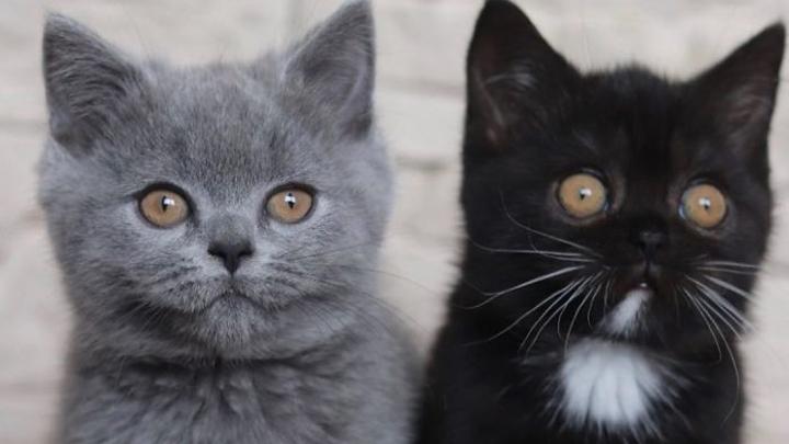 gato-colores