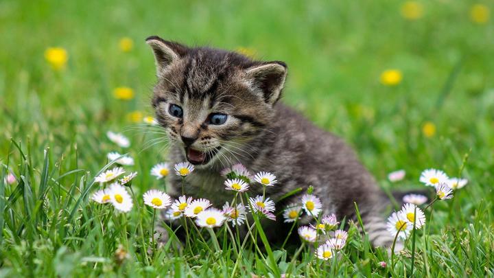 gatos-olores