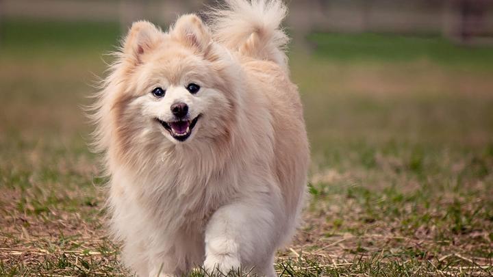 perros-pelo